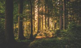 Warum unser Sohn ein Waldkindergartenkind wurde mit Vor un Nachteilen